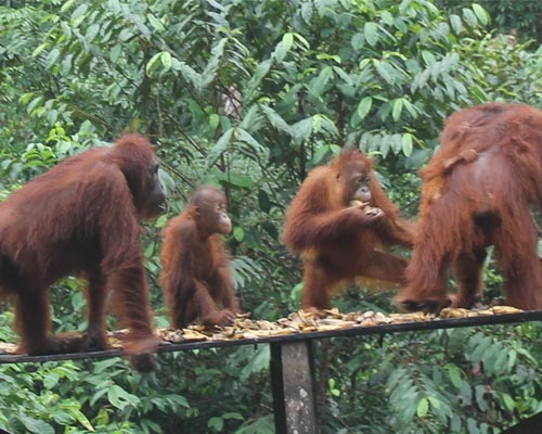 borneo indonesia tour packages